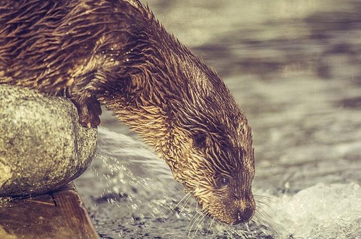 """Featured image for """"Bergen Aquarium"""""""